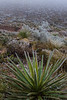 TX-2013-448: El Paso, El Paso County, TX, USA