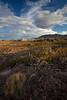 TX-2010-124: , Presidio County, TX, USA