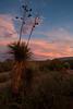 TX-2009-059: , Presidio County, TX, USA