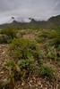 TX-2008-025: El Paso, El Paso County, TX, USA