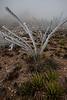 TX-2013-452: El Paso, El Paso County, TX, USA