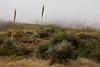 TX-2010-134: El Paso, El Paso County, TX, USA