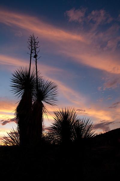 TX-2009-058: , Presidio County, TX, USA
