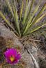2012-195: Quitman Canyon, Hudspeth County, TX, USA