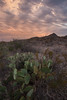 TX-2013-268: Big Bend National Park, Brewster County, TX, USA