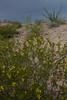 TX-2012-113: Alamo Reservoir 3, Hudspeth County, NM, USA