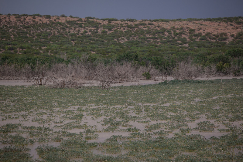 TX-2012-110: Alamo Reservoir 3, Hudspeth County, NM, USA