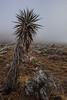 TX-2013-449: El Paso, El Paso County, TX, USA