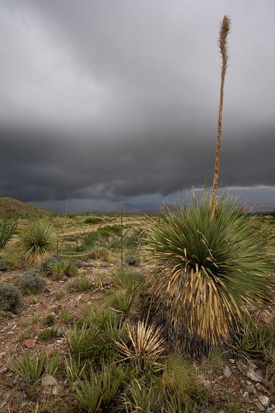 TX-2008-029: El Paso, El Paso County, TX, USA