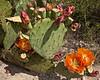 TX-2010-053: , Pecos County, TX, USA