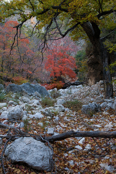 TX-2008-062: Guadalupe Mountains NP, Culberson County, TX, USA