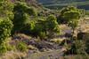 TX-2009-056: Pinto Canyon, Presidio County, TX, USA
