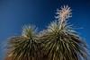 TX-2013-065: El Paso, El Paso County, TX, USA