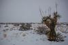 TX-2013-001: El Paso, El Paso County, TX, USA