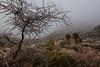 TX-2013-446: El Paso, El Paso County, TX, USA