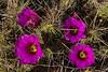 TX-2013-160: Big Bend National Park, Brewster County, TX, USA