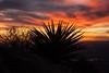 TX-2013-116: El Paso, El Paso County, TX, USA