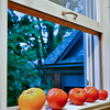 20090814_Stock_Tomato_Michigan-1