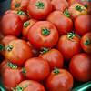 20100819_Stock_Tomato_Portland-1