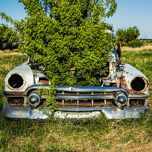Old Car with Plant in the Hood