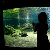 Girl admiring the aquarium, Zoomarine park, town of Albufeira, district of Faro, region of Algarve, Portugal