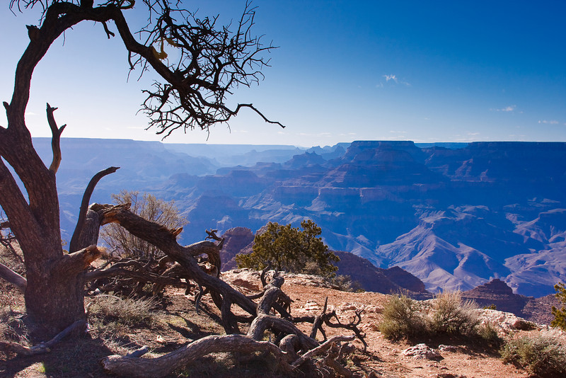 Along the edge of the Grand Canyon