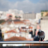 Landed dove on a terrace, Lisbon, Portugal