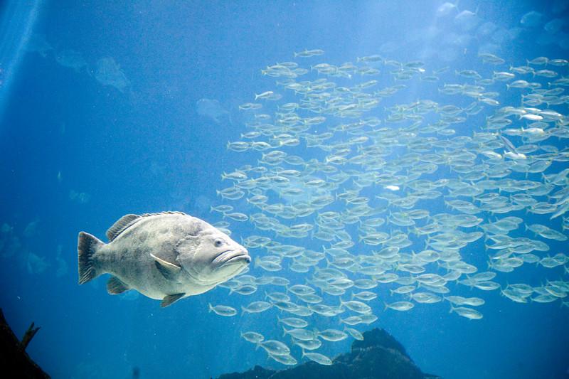 Big fish, Lisbon oceanario