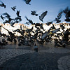 Flock of pigeons, Rossio square, Lisbon