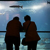 A couple watching the main tank in Lisbon Oceanario