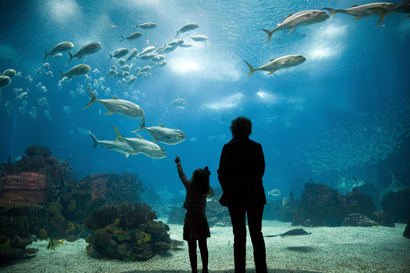 Mother and daughter admiring sea animals, Lisbon Oceanario, Portugal