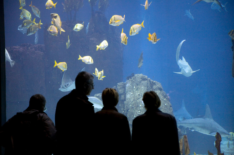People watching the fishes, Lisbon Oceanario