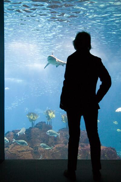 A woman looking at a shark, Lisbon Oceanario