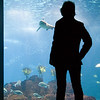 A woman looking at a shark, Lisbon Oceanario