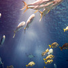 Shoals of different kinds of fish, Lisbon Oceanario
