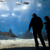 People admiring sea animals in the main tank of Lisbon Oceanario