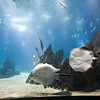 A couple of rays, Lisbon Oceanario