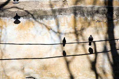 Doves landed on a cable in front of an old wall, Alfama, Lisboa