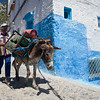 Donkey used for gas bottle delivery, Chefchaouen, Morocco