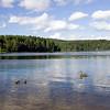 Idyllic image of ducks swimming on Sognsvann lake, Oslo, Norway.