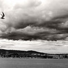 Dramatic B&W image of Oslo's fjord with a silhouetted gull against the stormy sky. The twin towers of Oslo's city hall can be seen on the background