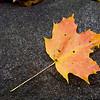 Fallen maple leaf over a dark stone, icon, iconic, symbol, concept, conceptual
