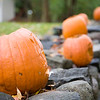 Halloween pumpkins on a stone fence, Connecticut, USA