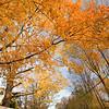 Fall landscape, Wilton, Connecticut, USA