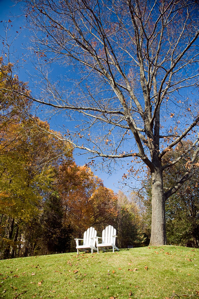 Bare maple and a couple of armchairs on a garden, Connecticut, USA