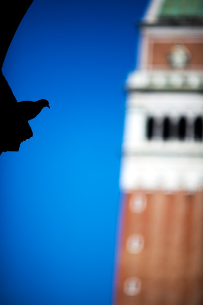 Silhouette of a dove on St Mark Square with the Campanile on the background, Venice, Italy