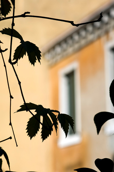 Garden silhouettes with typical Venetian walls on the background, Venice, Italy