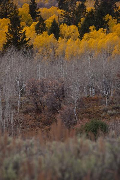 UT-2010-006: Spanish Fork Canyon, Utah County, UT, USA