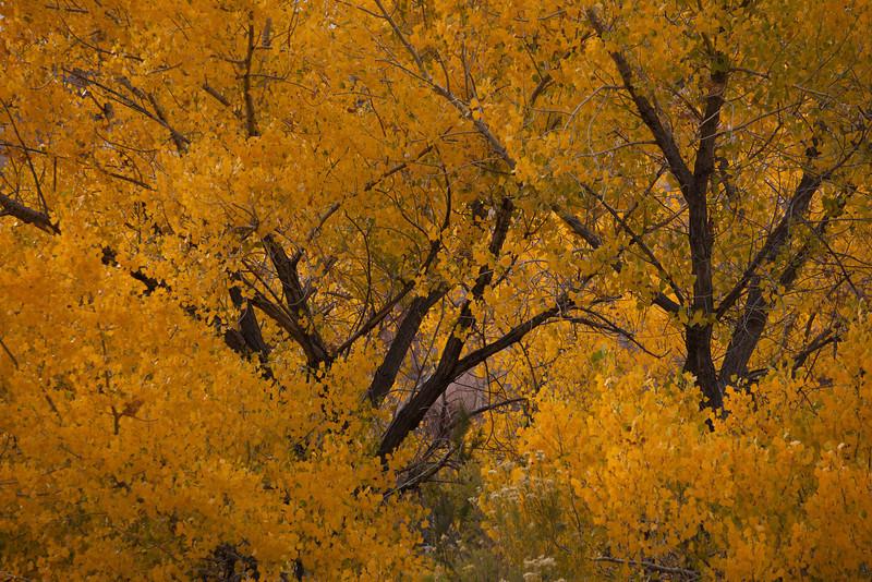 UT-2010-010: , San Juan County, UT, USA