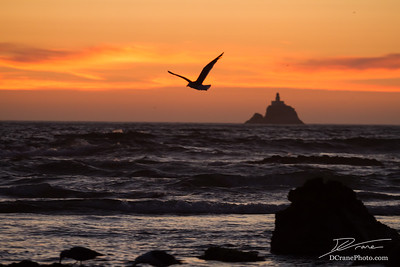 Seagull flying in front of distant lighthouse at sunset
